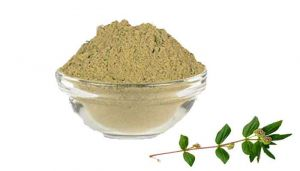 100 g Snake Weed / Amman Pacharisi Powder Online at best price - hbkonline.in