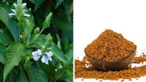 100 g Yellow Fruit Nightshade / Kandankathiri Powder Online at best price - hbkonline.in