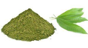 Mango Leaves Powder / Maavilai Powder / Mamidi Aku / Aam Ke Ped / Mavina Mara / Mangga