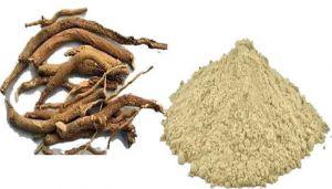 Spreading Hogweed Powder / Mukkarattai Powder / Atikamamidi / Gadahpurna / Tavilama / Punarnava / Komme Gida