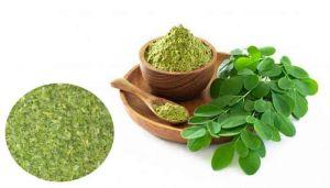 Moringa Leaves Powder / Murungai Ilai Powder / Tellamunaga / Munaga / Madhugunjana / Nugge Mara / Shevga
