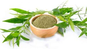 Green Chirayta Powder / Nilavembu Powder / Nelavemaa / Nelabevu / Kalamegha / Kiriyatta