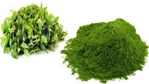 Dwarf Copper Leaf Powder / Ponnanganni Powder / Ponnaganti Koora / Kozuppa / Gudari Sag