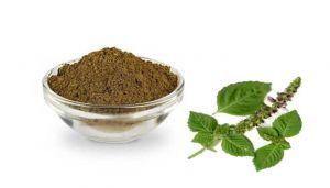 Basil / Tulsi  / Gaggera Chettu / Daeva Thulasi / Nala TIrtava / Shyama Tulsi / Apetarakshasi Powder